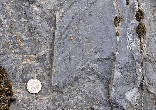 grey late Ordovician mudstone, Mid Wales