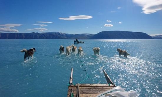 Dog sled on melting sea ice near Greenland
