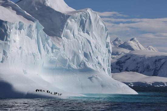 Gentoo Penguins on Iceberg in Gerlache Strait, Antarctic Peninsula