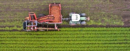 Organic carrot harvest in Germany