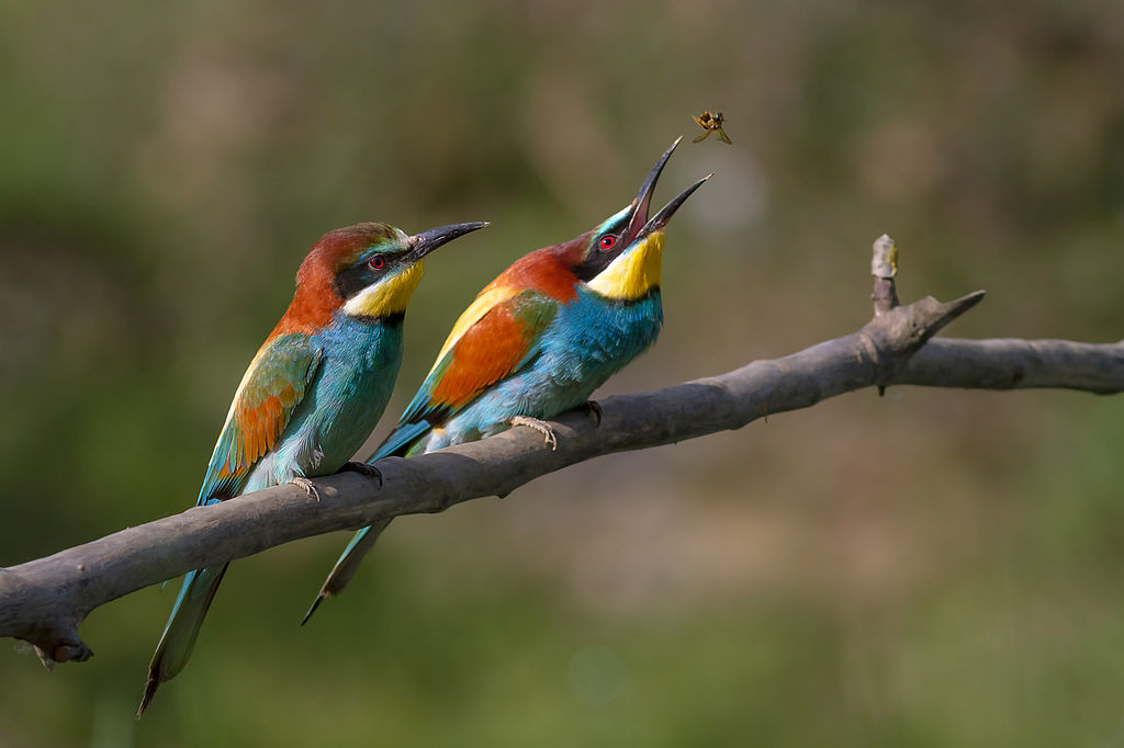 Pole-to-Pole-Stop-04-Bee-eaters