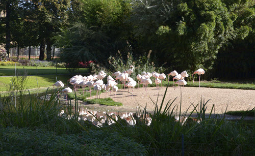 Pole-to-Pole-Stop-01-Flamingos