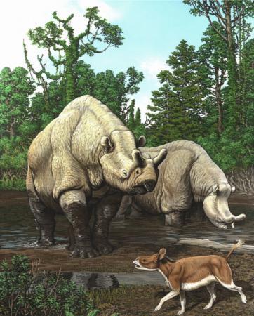 Painting of Rhino-like animals in North America