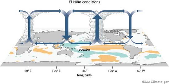 Walker circulation in El Nino conditions