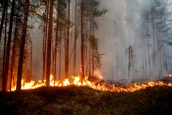 Arctic Circle Wildfires in Sweden 2018