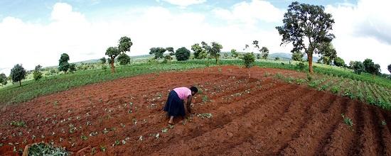 Malawian Subsistence Farmer