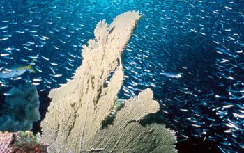 NOAA photo of ocean life