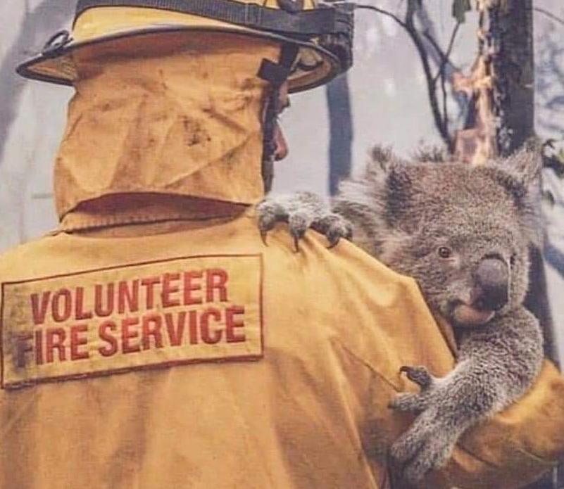 volunteer firefighter with koala